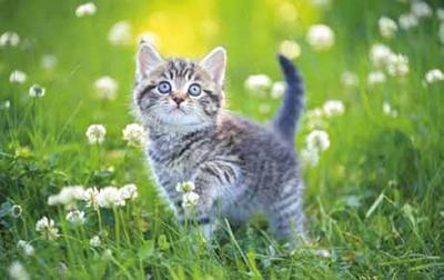 Motiv: Kätzchen