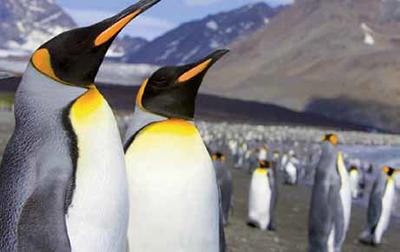 Motiv: Pinguine